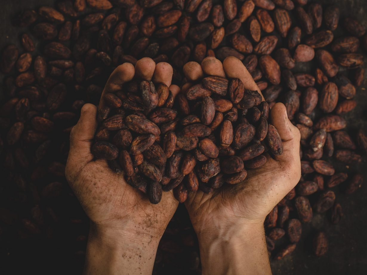 person holding cacao beans in their hands