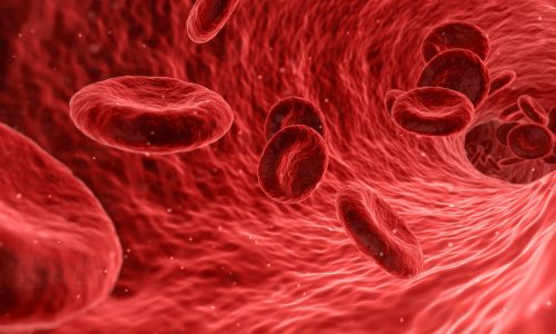 blood cells in blood vessels