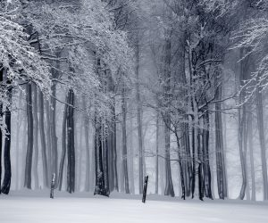 trees covered in snow in the winter