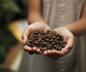 close up of a child's hands holding coffee beans