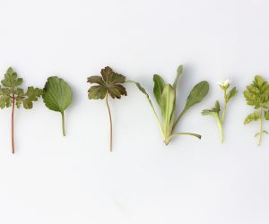 herbs laid out on a white surface