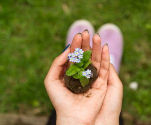 person holding soil with a flower in it