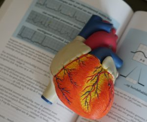 heart model on a book