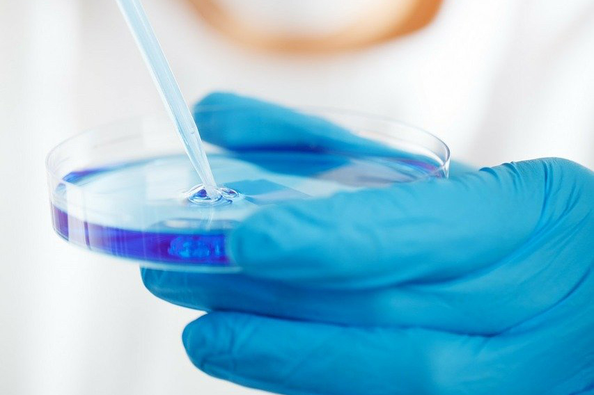 blue gloved person holding a petri dish