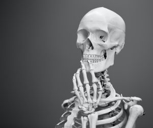 model of a skeleton