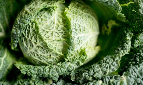 close up on a head of cabbage