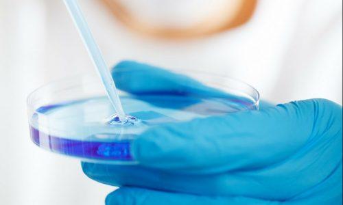 lab researcher holding petri dish