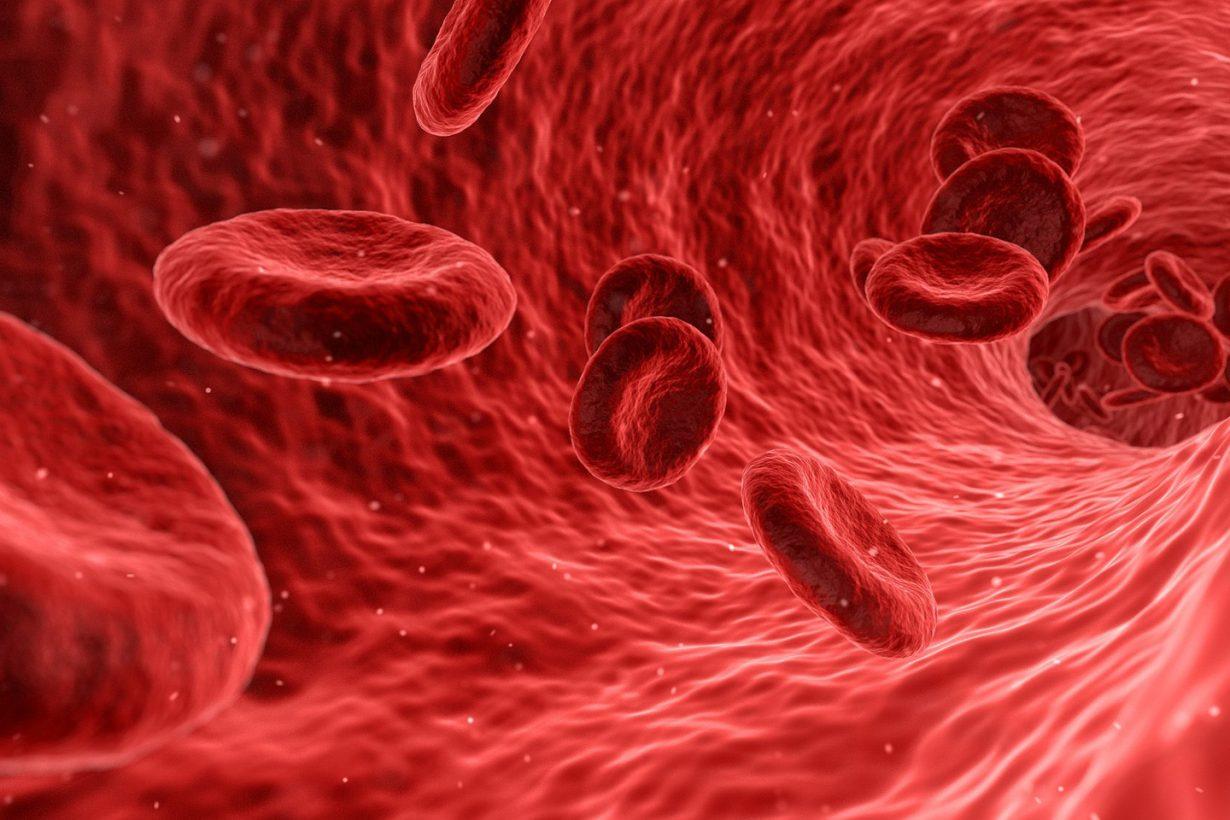 blood cells in blood vessels