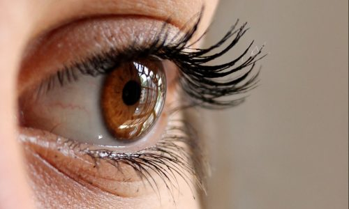 closeup of a brown eye and eye lashes