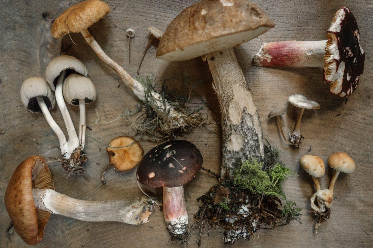 flatly image of various mushrooms