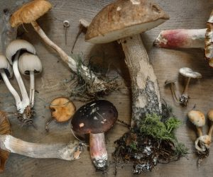 flatly image of various mushrooms