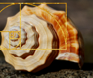 spiral shell displaying the golden ratio