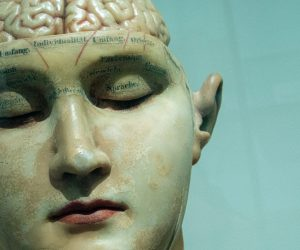 model of a human head and brain