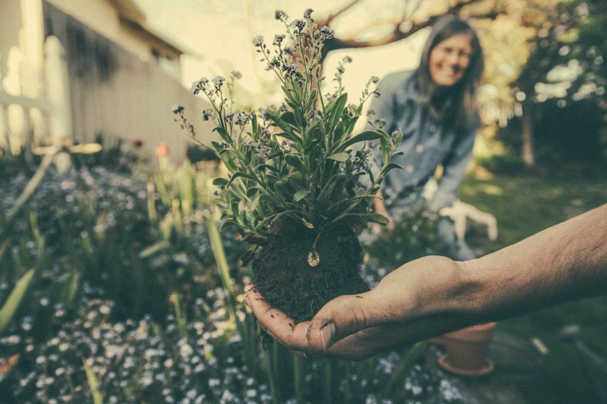 person holding up a flower and soil