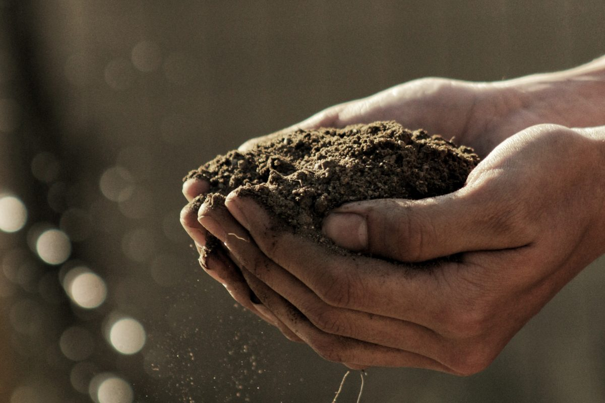person holding soil in their cupped hands