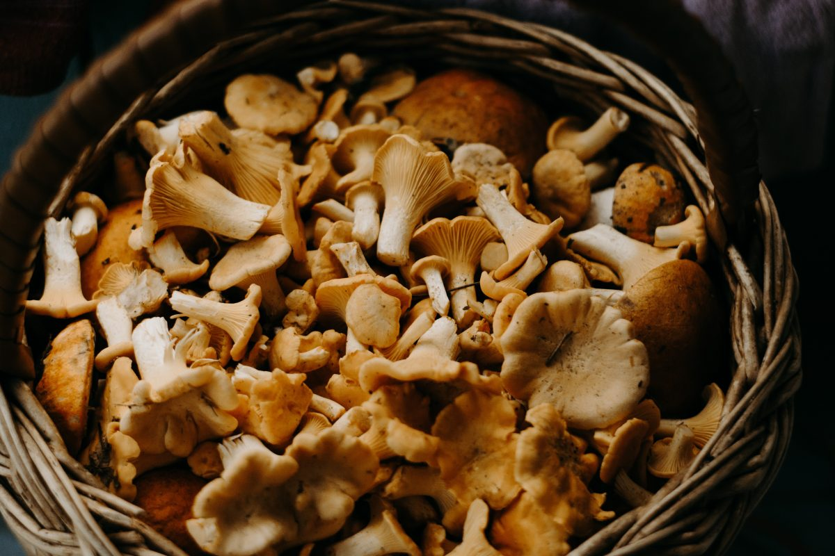 basket full of mushrooms