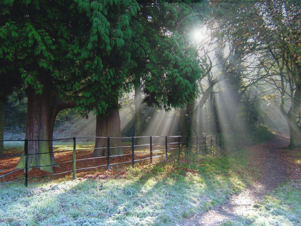 sunshine breaking through the trees